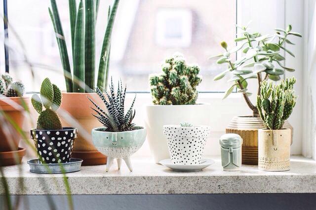 Friday Finds: Best Indoor Plant Pots